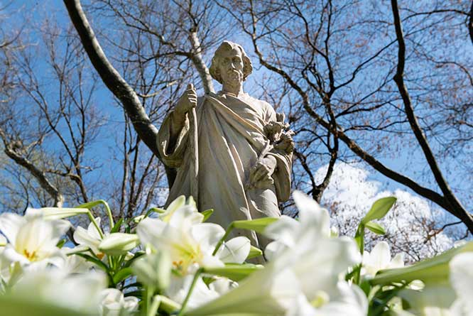 St Joseph Lilies - 1A